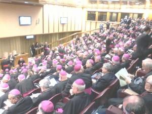 assemblea Cei1